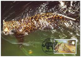 Belize : CM Carte Maximum Jaguar Panthera Onca Carnivore Felin Mammifere Amerique Animal WWF - Belize