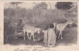 404 A.O.F. - JEUNES BERGERS SÉNÉGALAIS AVEC LEURS CHÈVRES - DOS NON DIVISÉ - Senegal
