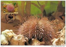 Alderney : CM Carte Maximum WWF Vie Marine Oursin Des Sables Sea Urchin - Alderney