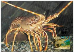 Alderney : CM Carte Maximum WWF Vie Marine Ouste Européenne  Spiny LobsterLang - Alderney