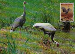 Oiseaux (White-naped Crane) Birds KOREA Animals Aves Faune Fauna Carte Maximum Card WWF - Corée Du Sud