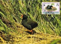 (WWF-118) Maxi Maximum Cards / Maxicard W.W.F. Tristan Da Cunha Gough Moorhen  1991 - Cartes Postales