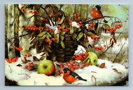 BULLFINCHES In Snow Winter Forest Rowan Berries Apple Birds Russian New Postcard - Animales