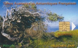 Télécarte 50U, Tirage 1500, Le Phylica île Amsterdam (Arbuste, Paysage, ...) - TAAF - Terres Australes Antarctiques Françaises