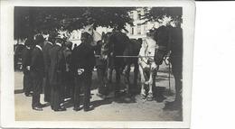 Paardenmarkt,  Paarden, Rue De Cureghem: Albert Bloos, Zuidlaan:  A La Croix Blanche,    Fotokaart - Marchés