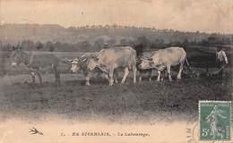 EN NIVERNAIS (58) -  Le Labourage - Attelage Improbable Ane Plus 4 Boeufs - Éditions Hirondelle - Francia