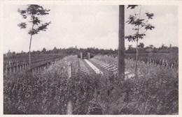Zillebeke, Duitsch Krijgskerkhof, Deutscher Kriegerfriedhof (pk68698) - Ieper