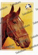 VARENNE - Cavallo Horse Sport Ippica - Caballos
