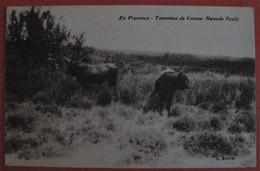 13 - EN PROVENCE TAUREAUX DE COURSE MANADE POULY -  Régionalisme Folklore Animaux - Frankrijk