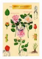 Bloc Feuillet YT BF24 1999 - Roses Anciennes - Oblitération Du 01/06/1999 Maignelay-Montigny (60) - Oblitérés