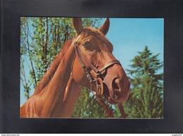 HORSE ** - Caballos