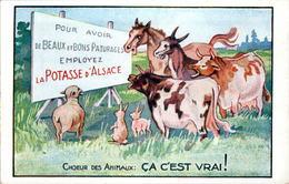 Cp Publicitaire Tardive Potasse D'Alsace Cheval Horse Vache Cow Lapin En B.Etat - Publicité