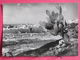 Visuel Très Peu Courant - Jordanie - Cana De Galilée - Vue Générale - Jolis Timbres - 1951 - Recto Verso - Jordanie