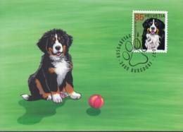 SCHWEIZ  2001, Maximumkarte, 100 Jahre Schweizerischer Club Für Berner Sennenhunde, 2007 - Maximum Cards