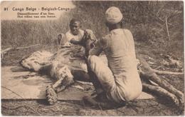Congo-Belge - Belgisch-Congo - Dépouillement D\'un Lion - Het Villen Van Een Leeuw - Congo Belge - Autres