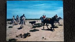 CPSM CHEVAL CHEVAUX EN  CAMARGUE FERRADE  TAUREAU ED CIM - Bull