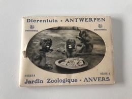 Pochette De 10 Petites Photos Anciennes Dierentuin ANNTWERPEN - Jardin Zoologique D'ANVERS - Antwerpen