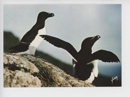 Petit Pingouin - Alca Torda (oiseaux De Mer N°1044 Cp Vierge) - Birds