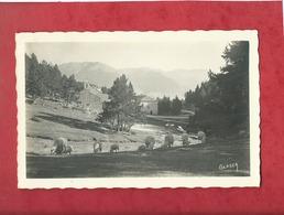 CPA -  Font Romeu - L'Ermitage  -  Glaser  - ( Moutons , Mouton ) - Otros Municipios