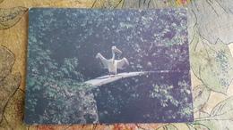 RUSSIA. Kaliningrad. Zoo   - OLD USSR Postcard  1980s - Pelican Bird - Uccelli