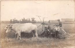 ¤¤  - Carte-Photo Non Située De Deux Paysans  -  Battage Du Blé  -  Attelage De Boeufs  -  Moissonneuses  -  ¤¤ - Farmers