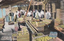 3009112California, Lemon Packing House 1911 (see Corners) - Altri
