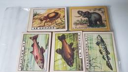 Lot  De 143 Images Anciennes Bon Point - Trade Cards