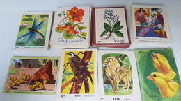 Lot  De 165  Images Anciennes ( Bon Point )  Olivier - Trade Cards
