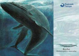 1 AK Färöer Faroe-Islands * Blauwal (Balaenoptera Musculus) - Die Karte Ist Nach Einer Zeichnung Hergestellt * - Färöer