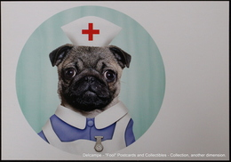 Famous Faces TAKKODA Pets Celebrity Photography Célébrités Animal Photographie Chien Infirmière Dog NURSE - Animaux Habillés
