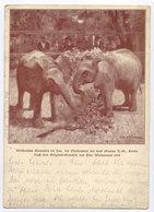Éléphants рostсard Allemagne - Elefanten