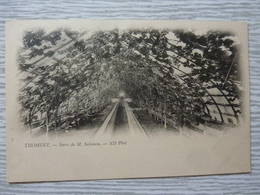 CP-Thomery (77)  Serre De M.Salomon - France