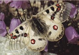 ANIMAUX ET FAUNE. CPSM. 3 CARTES . PAPILLONS. - Papillons