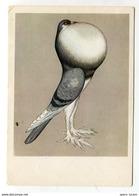 4 X Cartes Postales Pour Paul_ette - Oiseaux