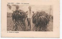 CARD CINA CONTADINO TRA COVONI DI MIGLIO -FP-N-2--0882-29436 - China