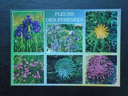 Fleurs Des Pyrénées , Multi-vues - Bloemen