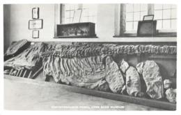 R313463 Ichthyosaurus Fossil Lyme Regis Museum. Lyme Regis Printing Company - Cartes Postales
