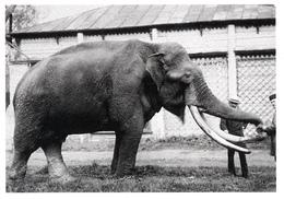 ZOO Moscow, RU - Set Of 12 Postcards 150 Anniversary - Pallas' Cat, Walrus, Elephant, Rhino, Hippo, Condor, Giraffe... - Russie