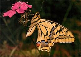 CPSM Papillon    L2973 - Papillons