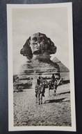 7) Le Caire - CAIRO - Egypte - Photo Carte - Panoramique - Format: 15/7.5cm - 2 Scans - Le Caire