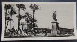 11) Le Caire - CAIRO - Egypte - Photo Carte - Panoramique - Format: 15/7.5cm - 2 Scans - Le Caire