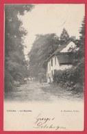 Libin-Bas - Les Hayettes - 1905 ( Voir Verso ) - Libin