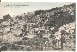 LE ROVE. TROUPEAU DE CHEVRES - France