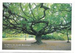 CPM - Association ARBRES - Arbres Remarquables - Le Hêtre Du Jardin Botanique De Bayeux (Calvados) - Trees