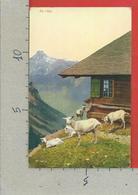 CARTOLINA NV SVIZZERA - Alpes Bernoise - Sur L'Alpe - 9 X 14 - BE Berne