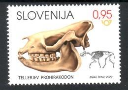 3333 Slowenian Slovenia 2020 ** MNH Archeological Finds Fossil Mammal Prohyracodon Telleri The Skeleton - Briefmarken
