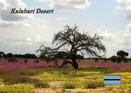 Botswana Kalahari Desert New Postcard - Botswana