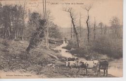 CPA Callac - La Vallée De La Bossière (avec Troupeau De Vaches) - Callac
