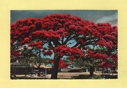 Nouméa - Les Flamboyans - New Caledonia
