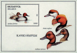 Ref. 213411 * NEW *  - BELARUS . 1996. WATER BIRDS. AVES ACUATICAS - Belarus